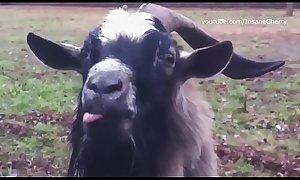 Skrillex &amp_ Damian Marley - Make It Bun Dem (Animal Cover) [only animal sounds]